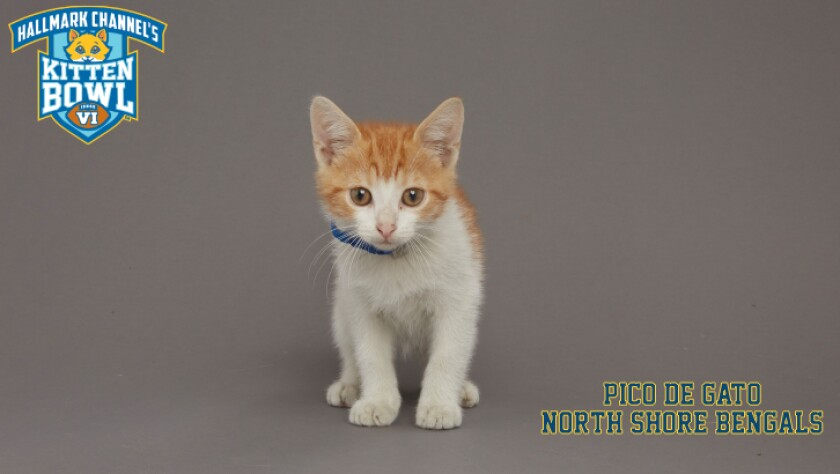 NB-Pico-De-Gato-meet-the-kittens-KBV_tmp653377265.jpg