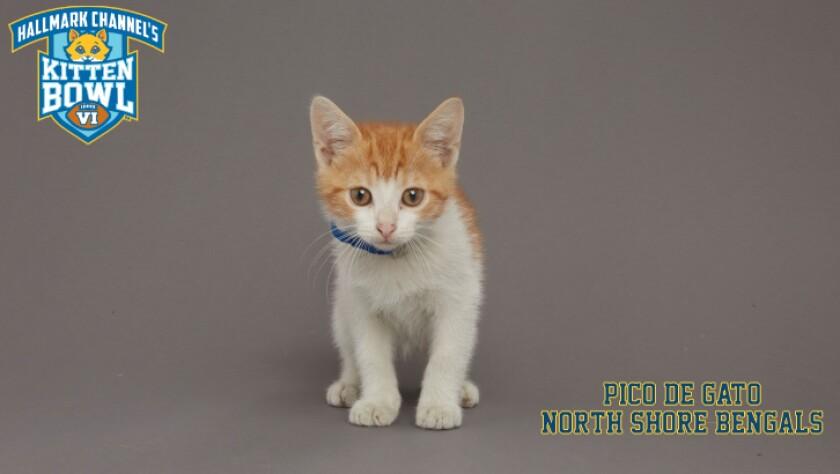 NB-Pico-De-Gato-meet-the-kittens-KBV_tmp653377265.jpg