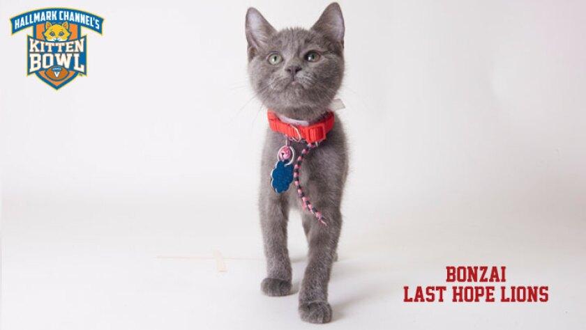 meet-the-kittens-KBV-LHL-Bonzai.jpg