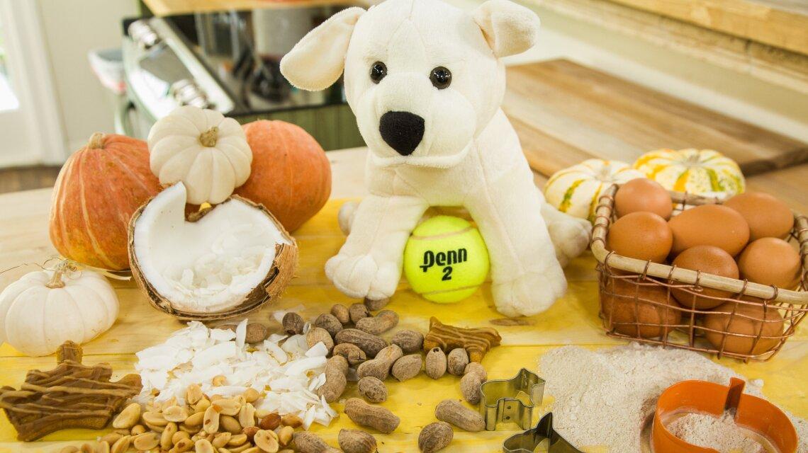 Healthy Dog Trick or Treats