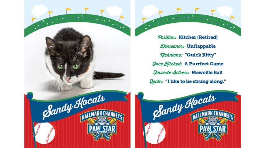 paw-star-sandy-kocats-2015