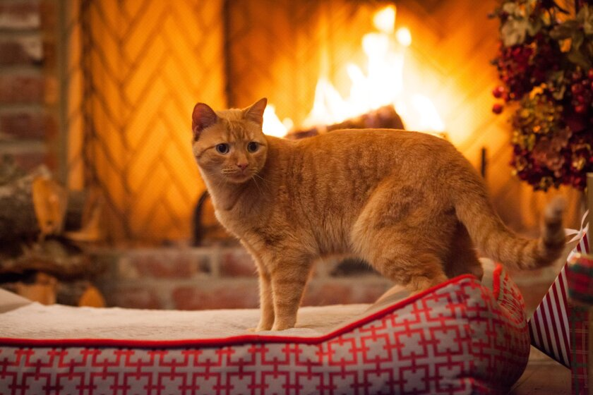 Photos from A Very Happy Yule Log - 9