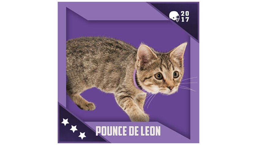 Kitten Bowl IV Emojis - North Shore Bengals - Pounce De Leon