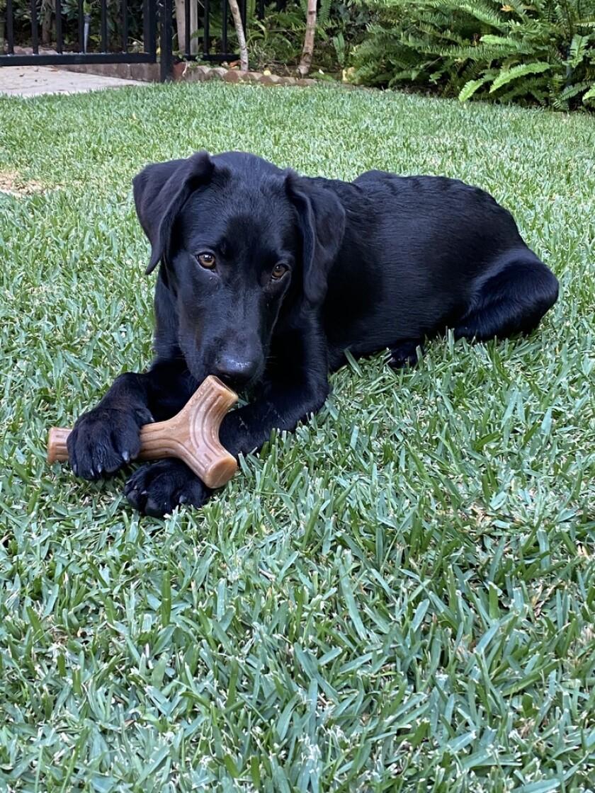 9024_Pet_Adoption_Annie.jpeg