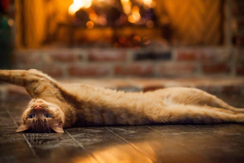 cat-fire4