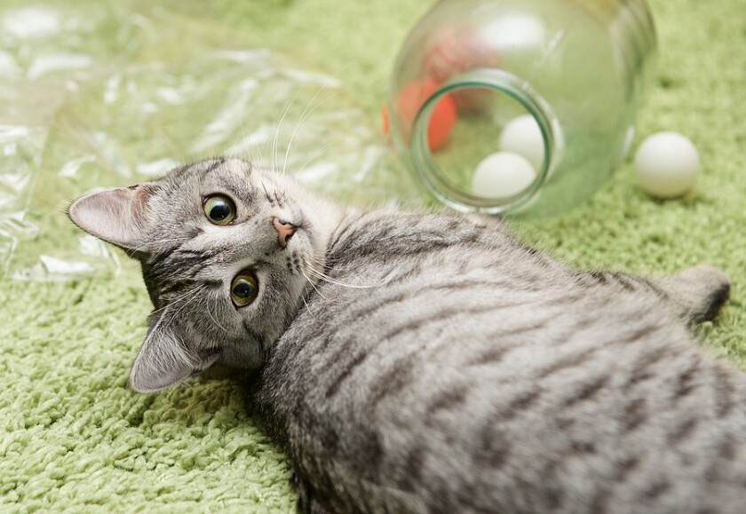 Bringing Kitty Home - 7