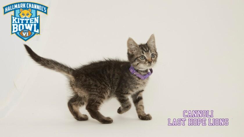 PP-Cannoli-meet-the-kittens-KBV.jpg