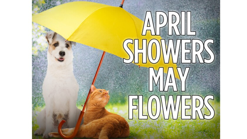 0401816-april-showers-may-flowers.jpg
