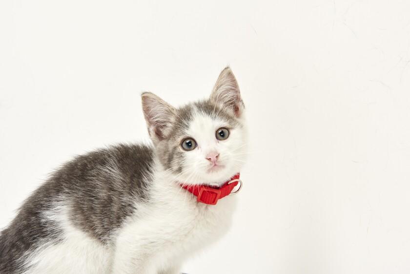 Kitten Bowl IV Photos - Boomer's Bobcats - 5