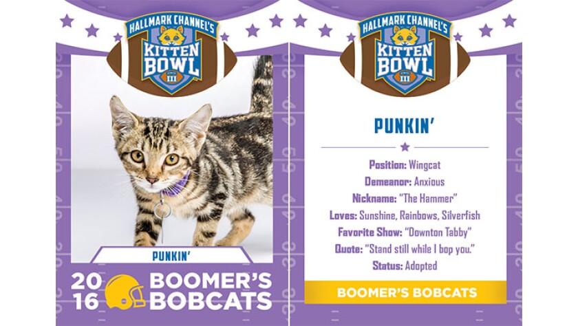 Punkin-bobcats-KBIII.jpg