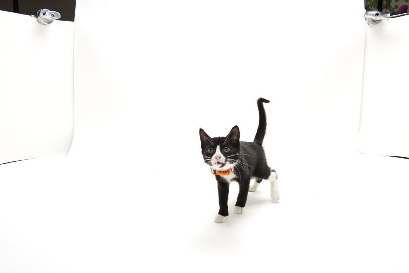 Kitten Bowl IV Photos - Home & Family Felines - 8