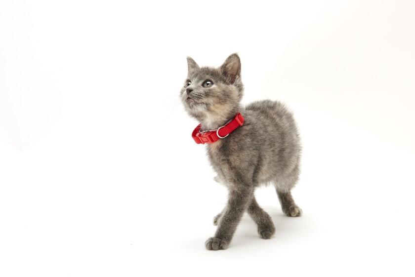 Kitten Bowl IV Photos - Boomer's Bobcats - 10