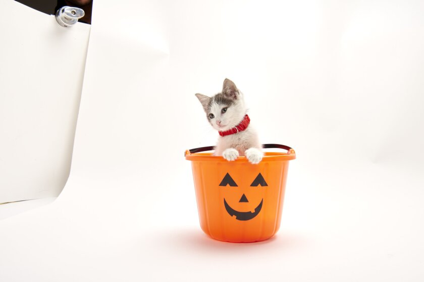Check out these frighteningly adorable Kitten Bowl cat-letes in training.