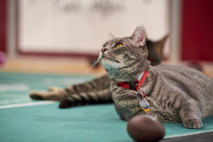 Photos from Cat Bowl - 11