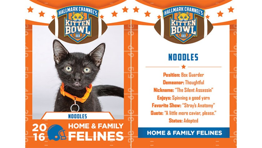 Noodles-felines-KBIII.jpg
