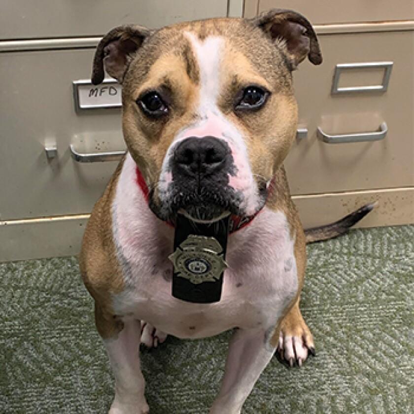 American Humane Hero Dog Awards 2021 Finalist - K-9 Hansel