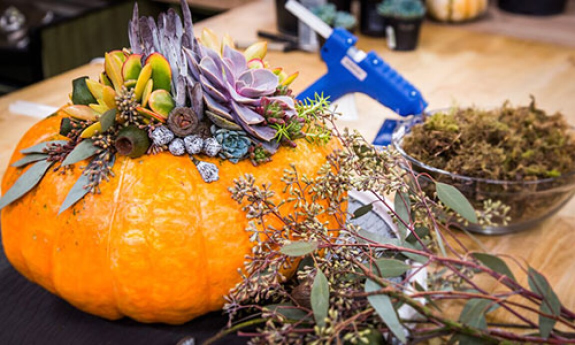 hf-ep2012-product-diy-succulent-pumpkin-centerpieces.jpg