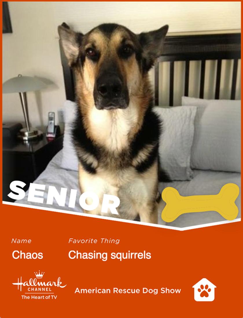 Chaos-senior.png