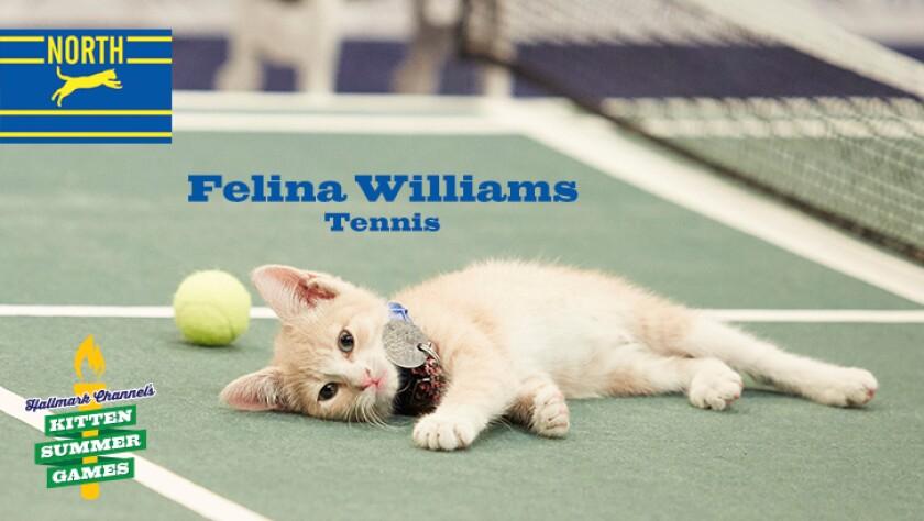 KittenSummerGames_726x410_FelinaWilliams.jpg