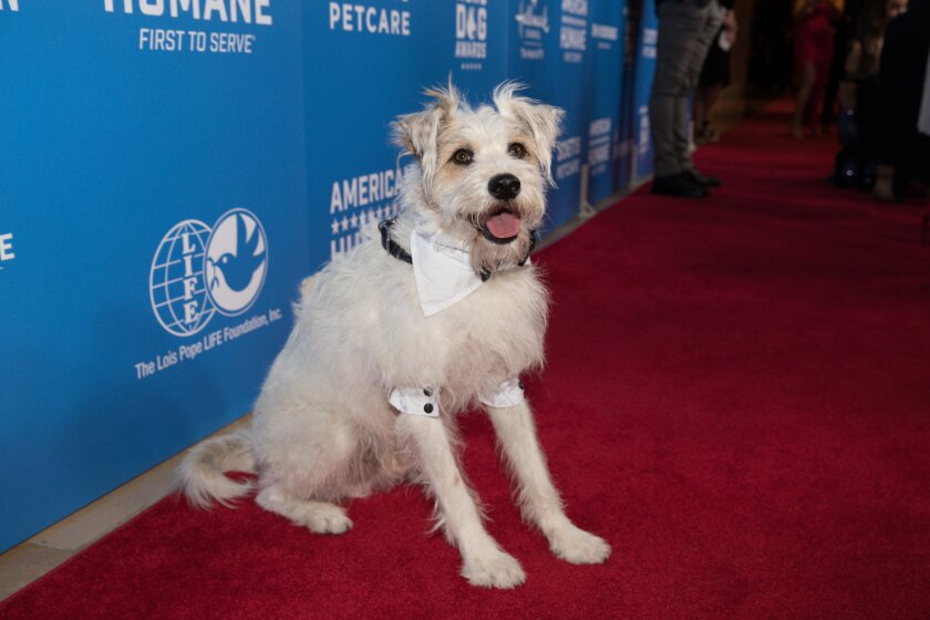 2018HeroDogAwards-RedCarpet_0138.jpg