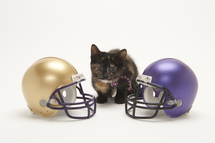 Kitten Bowl Football - 10