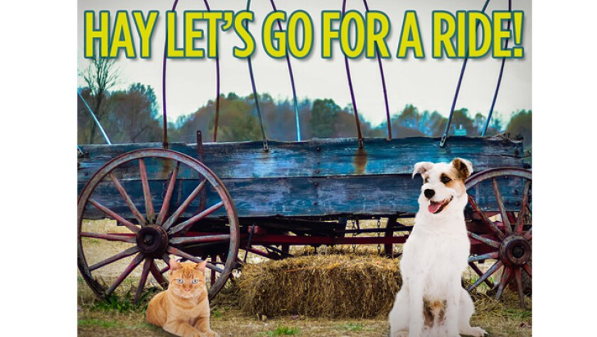 101016-hay-lets-go-for-a-ride.jpg