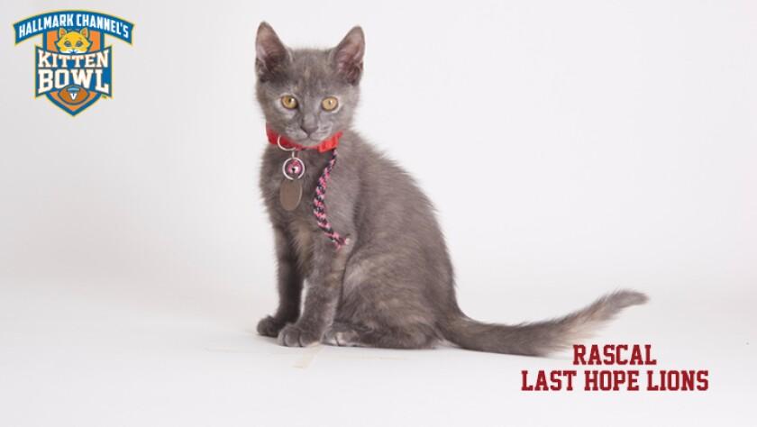 meet-the-kittens-KBV-LHL-Rascal.jpg