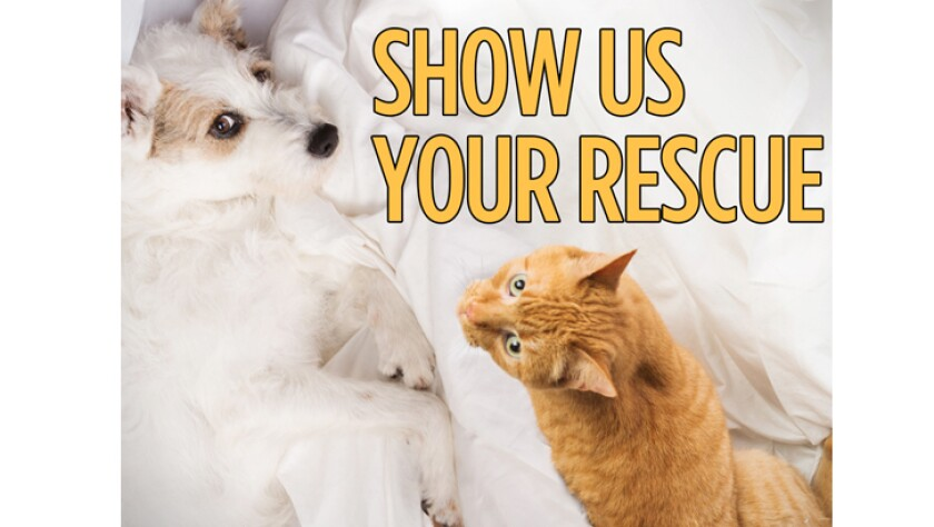031416-show-us-your-rescue.jpg