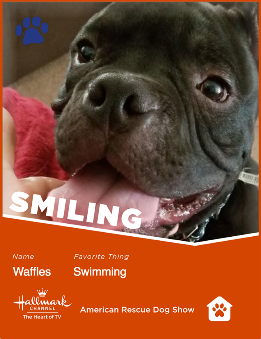 Waffles-smiling.png