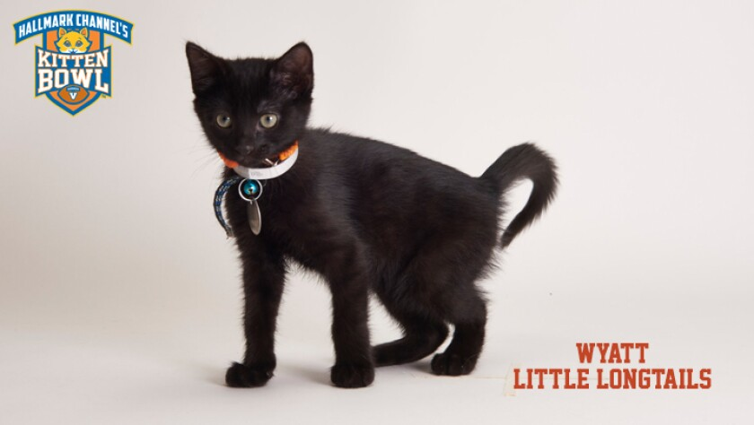 meet-the-kittens-KBV-LL-Wyatt.jpg