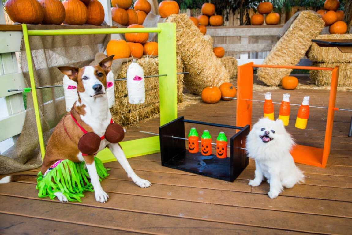 DIY Treat Dispenser Game for Pets with Laura Nativo