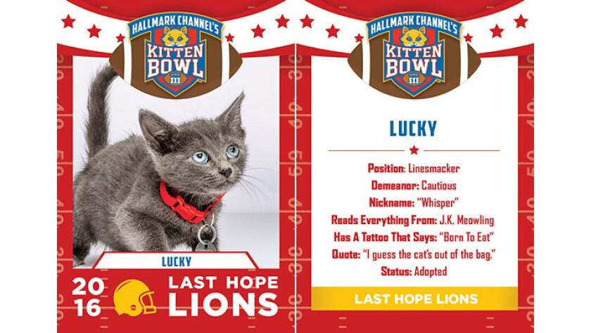 Lucky-lions-KBIII.jpg