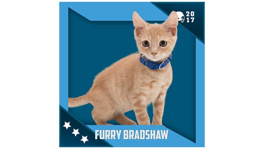 Kitten Bowl IV Emojis - North Shore Bengals - Furry Bradshaw