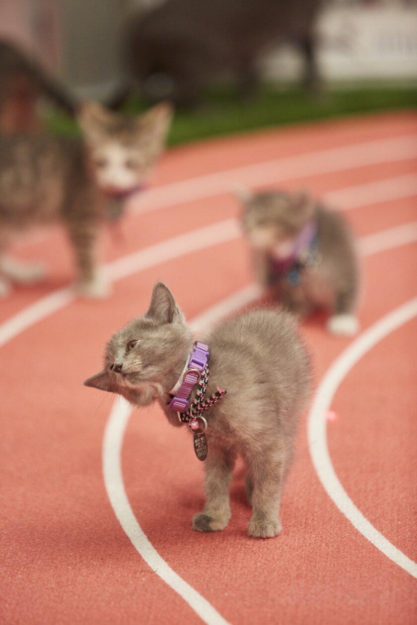 KittenSummerGames_0201.jpg