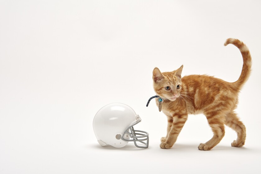 Kitten Bowl Football - 6