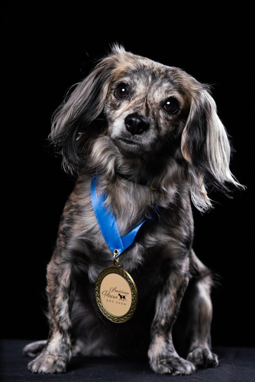 Winner Portraits - Maizy - Best in Wiggling