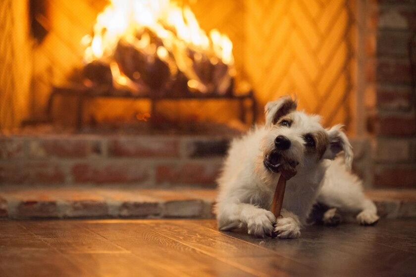 """Photos from """"Happy Yule Log"""" - 8"""