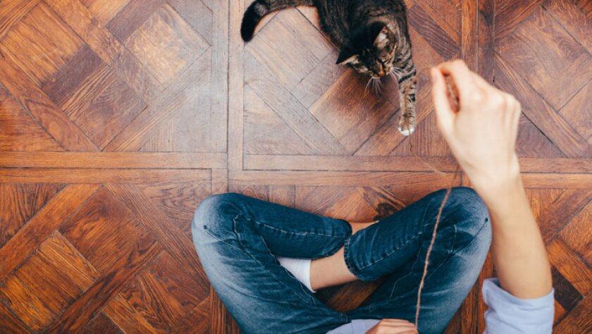 03_loads-of-cat-love.jpg