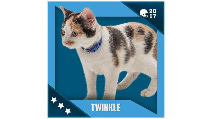 Kitten Bowl IV Emojis - North Shore Bengals - Twinkle