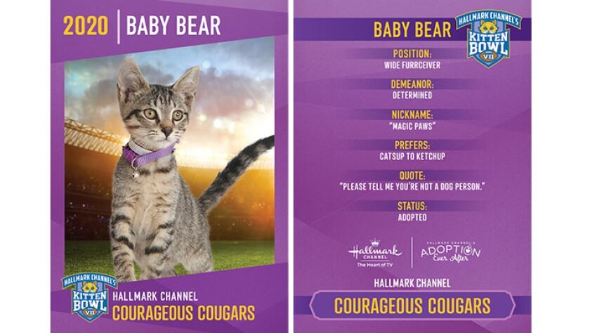 CC-Baby-Bear.jpg