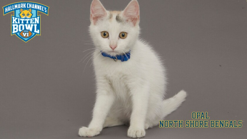 NB-Opal-meet-the-kittens-KBV_tmp653377265.jpg