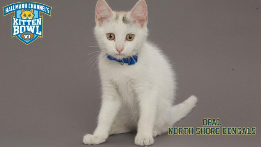 NB-Opal-meet-the-kittens-KBV_tmp653377265.jpg