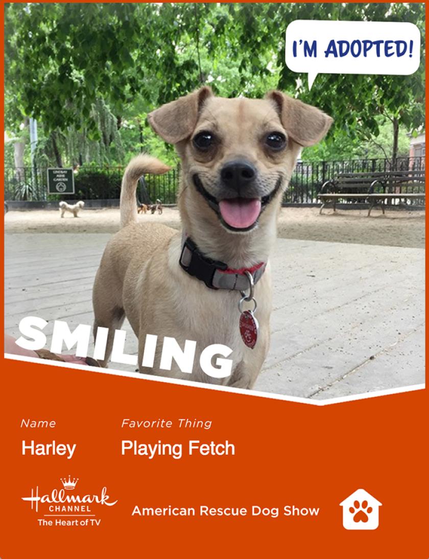 Harley-smiling.png
