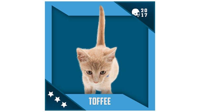 Kitten Bowl IV Emojis - North Shore Bengals - Toffee
