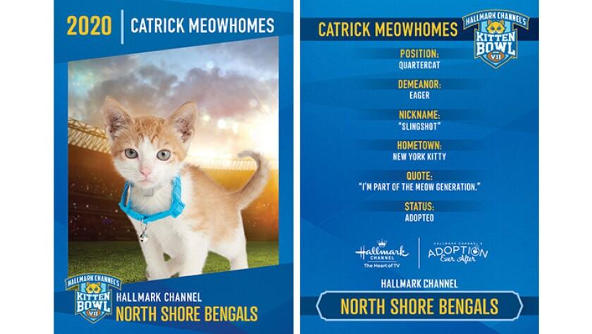 NSB-Catrick-MeowHomes.jpg