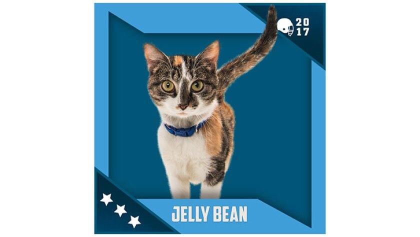 Kitten Bowl IV Emojis - North Shore Bengals - Jelly Bean