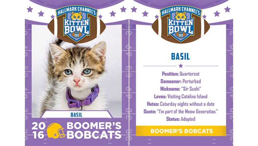Basil-bobcats-KBIII.jpg