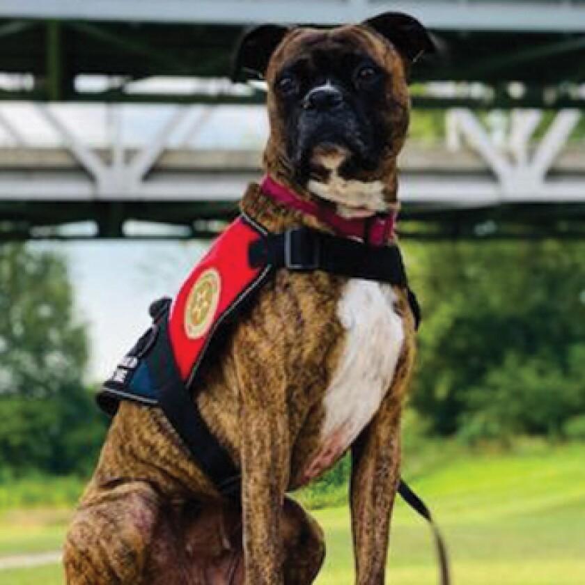 American Humane Hero Dog Awards 2021 Finalist - Sobee