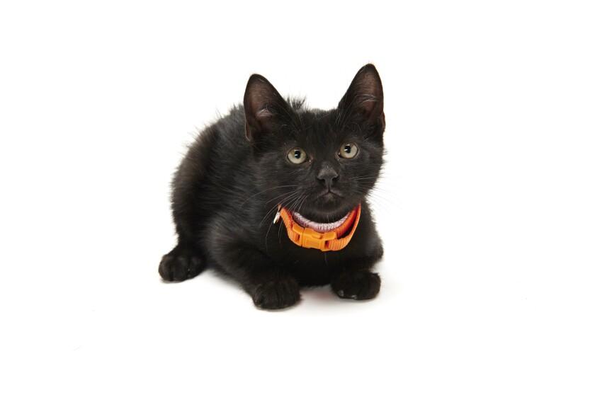 Kitten Bowl IV Photos - Home & Family Felines - 10