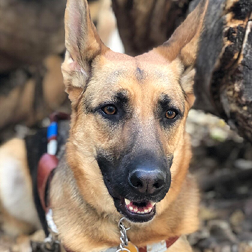 American Humane Hero Dog Awards 2021 Finalist - Henna